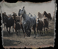 Beautiful horse blanket